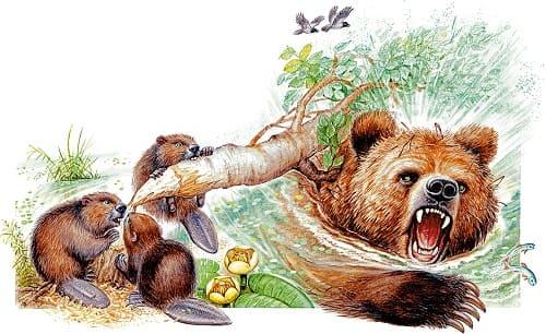 Сказка Дремучий медведь К Г Паустовский