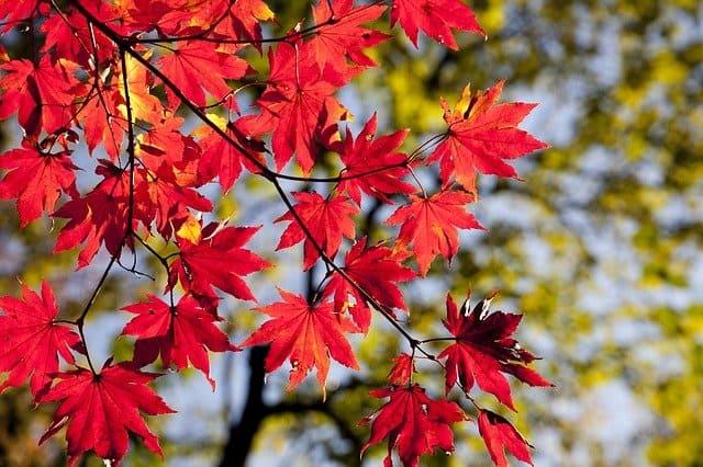 Осень-К Д Бельмонт читать