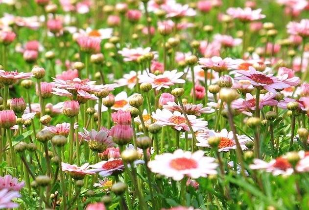 Полевые цветы И. Бунин читать
