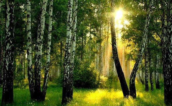 Все темней и кудрявей березовый лес Бунин