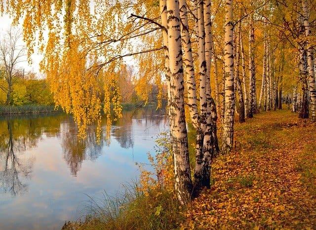 Золотая осень-Пастернак