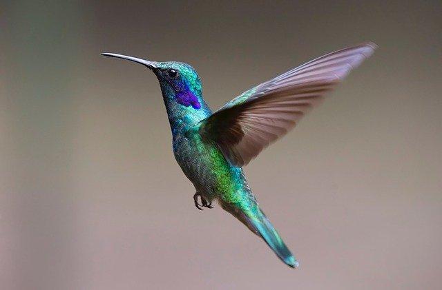 Кратко про птиц