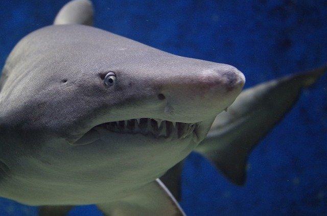 Коротко про акул