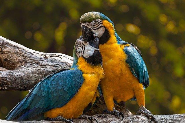 Коротко про попугаев