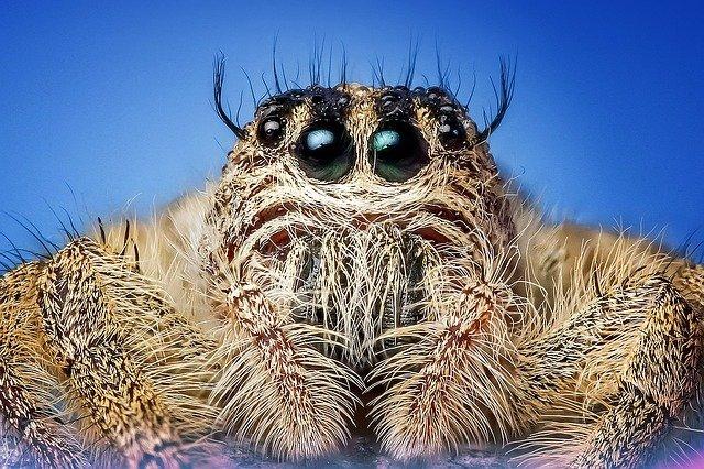 Краткая характеристика класса паукообразные