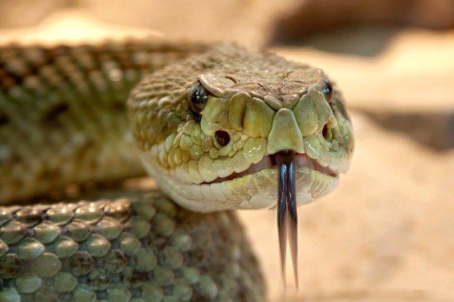 Кратко о змеях