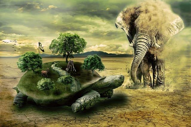 Кратко о черепахах