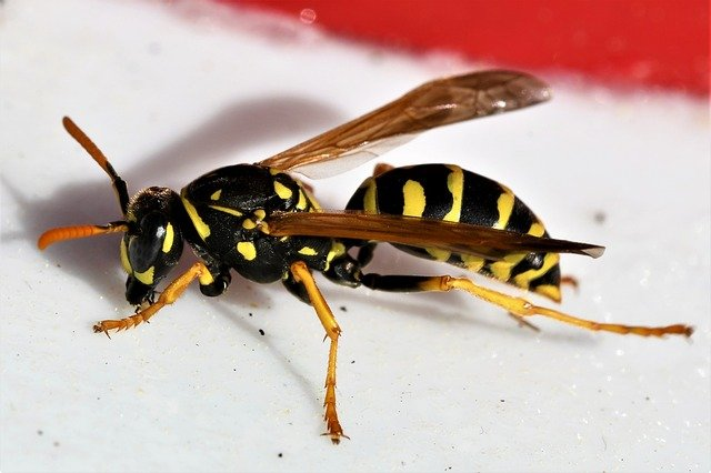 Кратко про насекомых