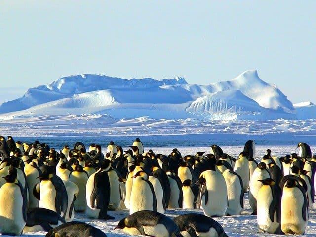 Кратко про пингвинов