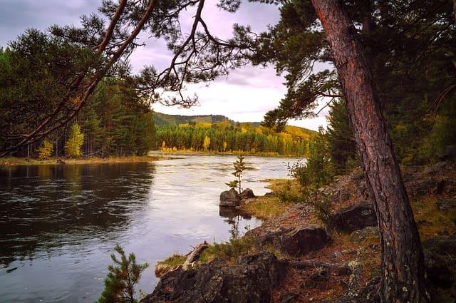 Леса-природная зона Земли