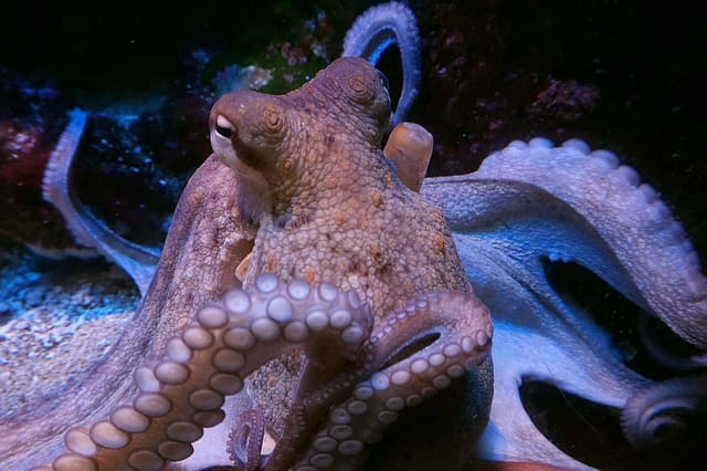 Моллюски краткое описание