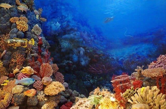 Подводный мир коралловых рифов