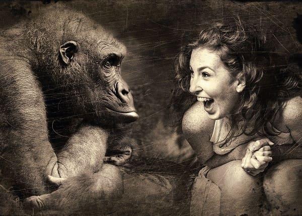 Приматы кратко