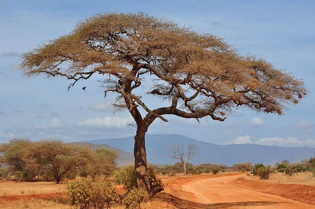 Природные зоны Земли-саванны