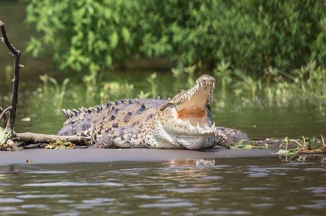 Рептилии или пресмыкающиеся-кратко