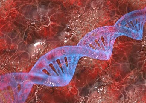 Строение молекулы ДНК-Ген
