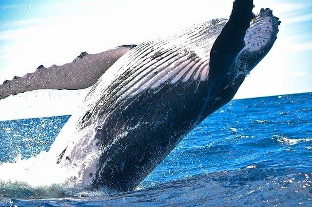 Отряд китообразные кратко