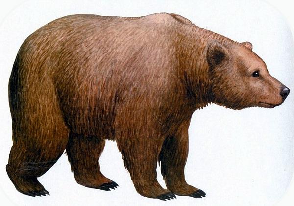 Рассказ бориса Житкова-Медведь